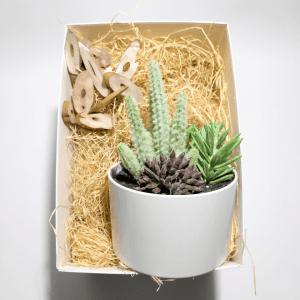 caja-regalo-amigo-invisible-cactus-colors