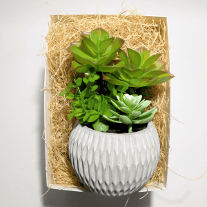 caja-regalo-amigo-invisible-green-succulents