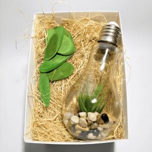 caja-regalo-amigo-invisible-suculenta