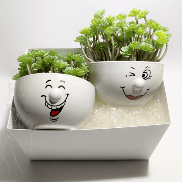 caja-regalo-pack-amigo-invisible-smile-con-plantas-suculentas-artificiales